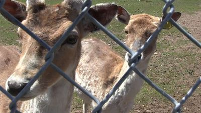 Quebec zoo owner charged with animal cruelty