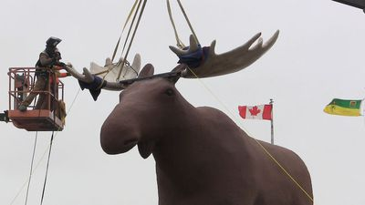 'No more papier mache dog:' Mac the Moose gets his bigger rack