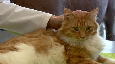 Researcher discusses new method of determining pain in cats