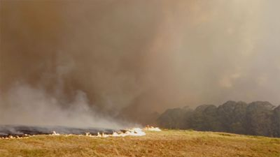 Wildfires in Australia's New South Wales Are Finally Contained