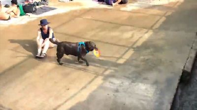 Dog finds a clever way to play fetch!