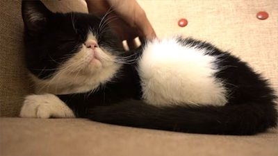 Study Says Petting Dogs or Cats Can Reduce Stress
