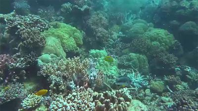 Coral Reefs Will Be Gone by the End of the Century, Report Says