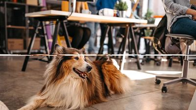 Employees Want Office Pets Over Vacation Days and Raises, Survey Says