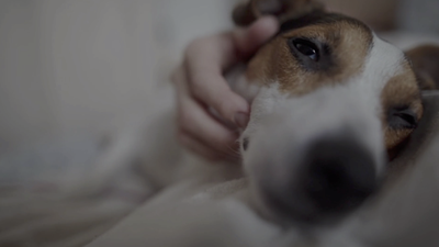 Experts Explain Why Your Pets Aren't Likely to Transmit COVID-19