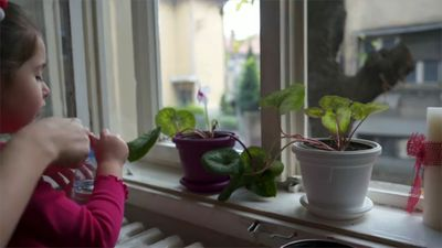 10 Plants That Are Safe for Kids and Pets
