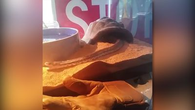 Amazing mouse scapes of snake attack!