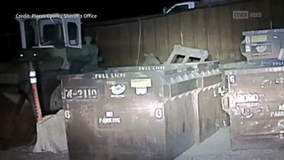 Bear cub rescued from dumpster