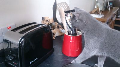 Scared of toaster!