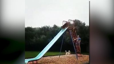 Dogs having fun in the slides