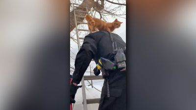 Cat Rescued From Tree On Cop's Shoulders