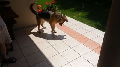 See what this dog does...