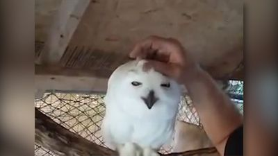 Hedwig, is that you?