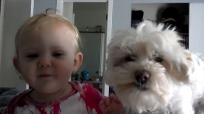 Dogs are babies's best friends!