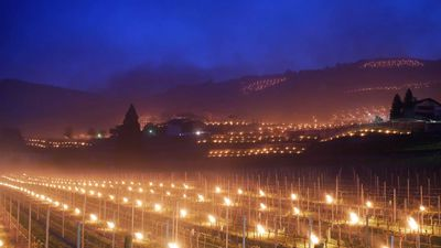 Winery Uses Flaming Torches To Protect Grapes From Freezing