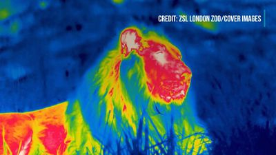Zoo Creates Amazing Thermal Images