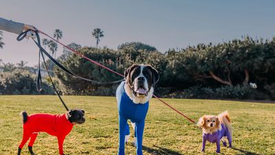 Shed Defender: The Onesie For Your Dog