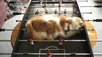 """Let's play foosball, human"""