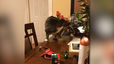 Cat having a small accident