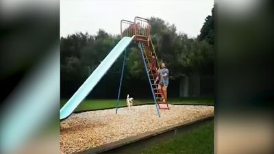 Dog having fun on slide