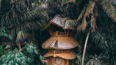 Spectacular Bamboo Treehouse That Sits In The Indonesian Jungle Is Available To Rent