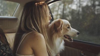 Uber is testing a dog inclusive riding option