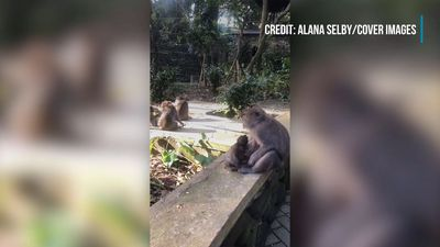 Cheeky Monkey Cannot Escape Its Mother
