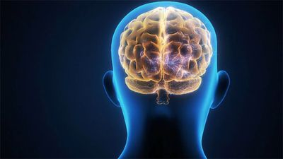 Excessive Brain Activity Is Linked to Shorter Life Span in New Study