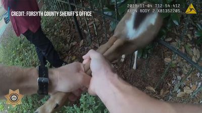 Police Officer Finds Young Deer Trapped In Fence