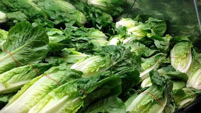 Romaine Lettuce Linked to 67 E. Coli Infections Across US, Says CDC