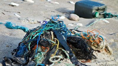 The whale and Norway's plastic collectors