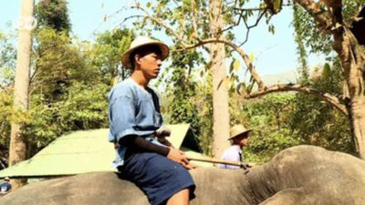 Thailand: The problems of elephant tourism