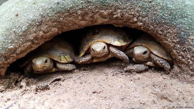 Tortoise protection in Cambodia
