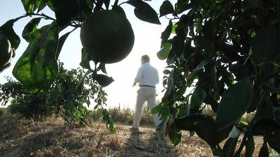 Spain: Orange industry under threat