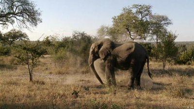 South Africa's wildlife reserves under threat