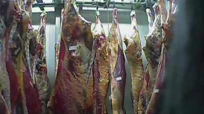 World News - Poland sick cow slaughterhouse: meat from closed abattoir 'sold to nine EU countries'