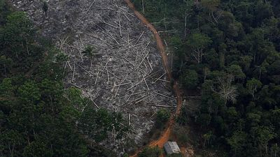 Brazilian government defends record on Amazon deforestation
