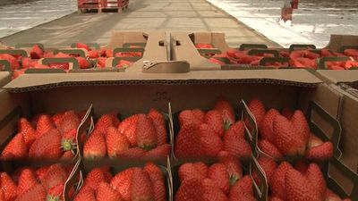 Keep what you sow: Fruit growers struggling amid coronavirus lockdown