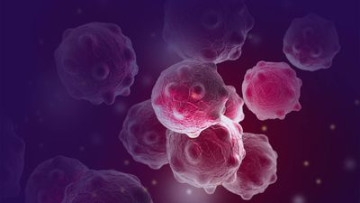 Imugene (ASX:IMU) report PD1-Vaxx generates high levels of antibodies