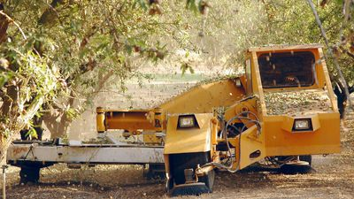 Select Harvests (ASX:SHV) says almond harvest to continue