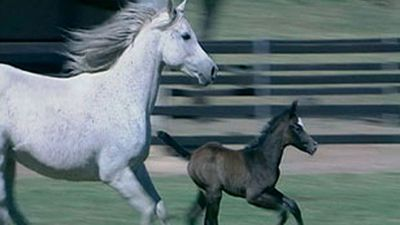 Grainger's World - Fabulous Foals