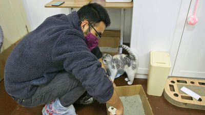 Wuhan's cat rescuer: the man saving pets abandoned during coronavirus outbreak