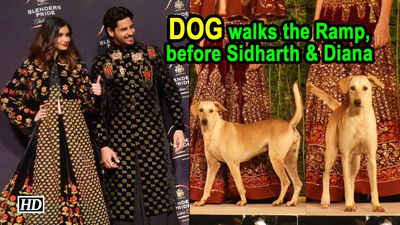 Stray Dog walks the Ramp, before Sidharth & Diana