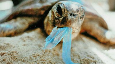 Seychelles hosts marine litter summit