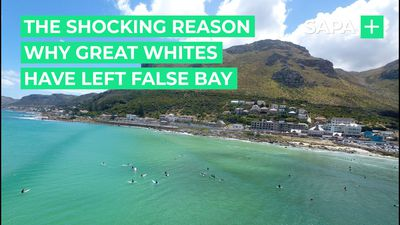 The shocking reason why great whites have left False Bay