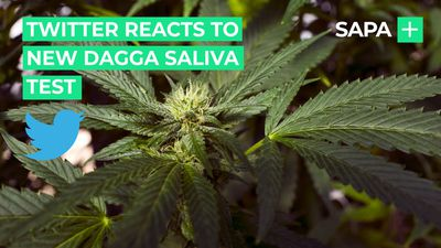 Twitter reacts to new dagga saliva tes