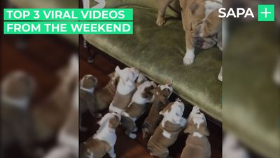 Top 3 viral videos from the weekend