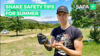 Snake catcher shares summer safety tips