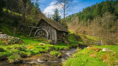 Top 10 Black Forest Traditions