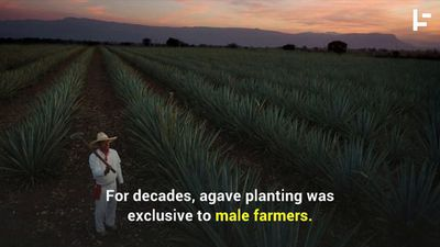 How Mexican Women Kept Tequila Alive